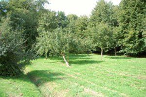 Eine große grüne Wiese mit kleinen Bäumen in der Mitte und umrandet von dichten Bäumen