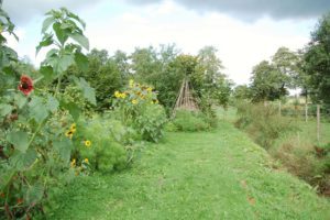 Ein kleines Tipi-Zelt aus Holz in der Natur auf der Wiese umrandet von Sonnenblumen