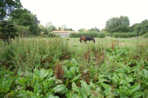 Pferde die im Hintergrund auf der Wiese grasen. Vorne sieht man verschiedene Gewächse
